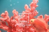 Living Coral (tạm dịch: đỏ hồng san hô) :màu của năm 2019